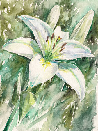 water lilly: White lily flower in garden Picture created with watercolors  Stock Photo