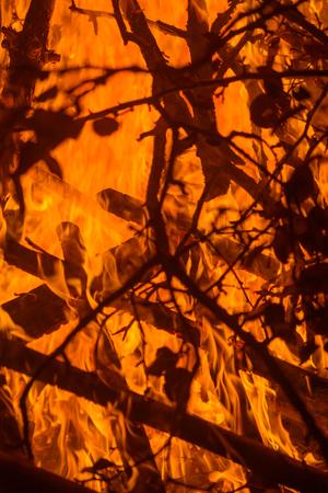 La naturaleza de fondo con el fuego brillante en el bosque en la noche oscura