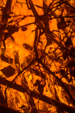 Nature background with bright fire on the wood at dark night