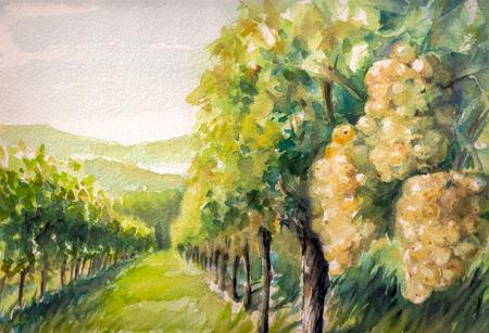 ブドウ畑の風景です。画像の水彩画を作成しました。 写真素材 - 32369372