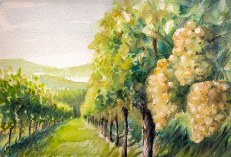 Landscape with vineyard.Picture created with watercolors. Stock Photo