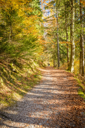 Pathway in beautiful forest in autumn. photo