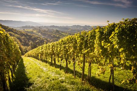 Styrian Toscaanse Wijngaard in de zomer zonsondergang, Oostenrijk