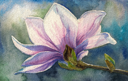 magnolia: Magnolia blossom on branch.Picture created with watercolors.