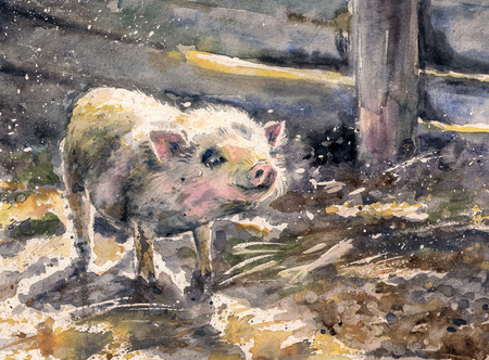 Watercolors painted illustration of a cute small pig in farm.