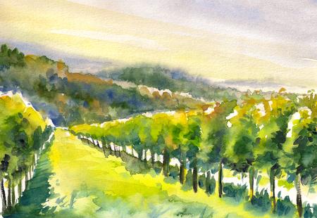 steiermark: Watercolor painted illustration of Styrian Tuscany Vineyard, Austria Stock Photo