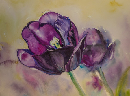 lila: Close up of purple tulips painted with watercolors.