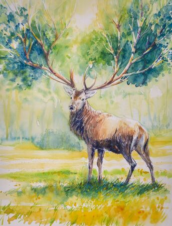 whose: Summer.Red deer with big horns on Whose grow leaves.Picture created with watercolors. Stock Photo