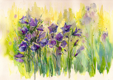 Blubell Flowers, Campanula in garden.Picture created with watercolors. Stock Photo