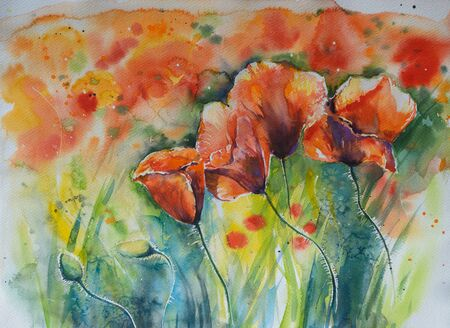 mana: Red poppy on a field.Picture created with watercolors.