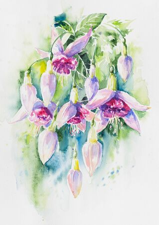 hanging dangling: Beautiful pink flowers and buds of fuchsia flower.Picture created with watercolors.