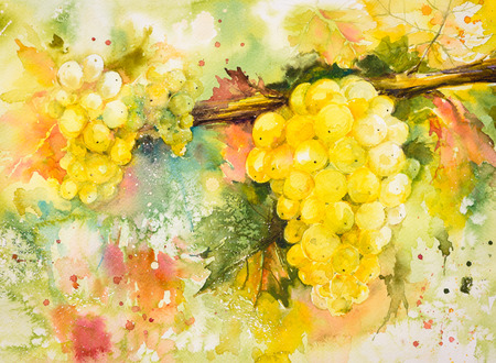 article: Bunches of yellow grapes in vineyard.Picture created with watercolors.