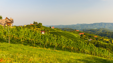 Vineyards in autumn with winery - White wine grapes before harvest, Southern Styria Austria