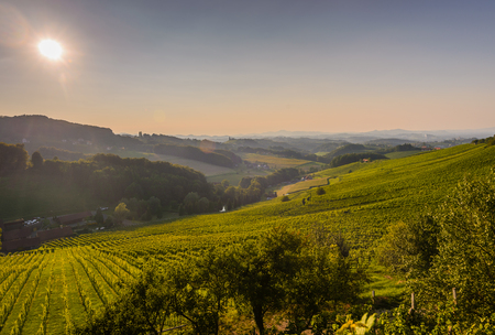 Vineyards with winery in autumn - White wine grapes before harvest, Southern Styria Austria Stock Photo