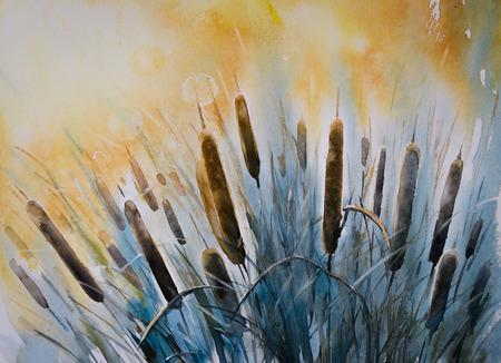 bulrush: Watercolors painting of Typha latifolia (common bulrush )