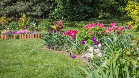 flori culture: Colorful flowers and green grass in spring garden Stock Photo
