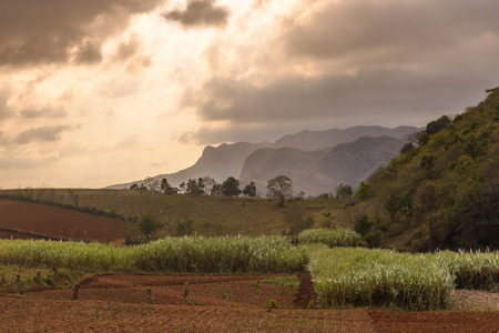 View on the Vinales valley in Which the tobacco plant from Which he is being planted is produced best cigars in the world Cuba Pinar del Rio province