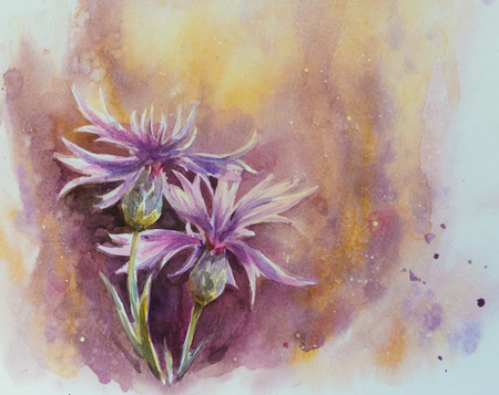 articles: Nature background with delicate conflowers.Picture created with watercolors.