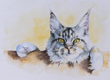 Maine Coon portrait.Picture created with watercolors. Stock Photo