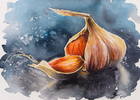 Whole garlic, one segment and clove.Picture created with watercolors. Stock Photo