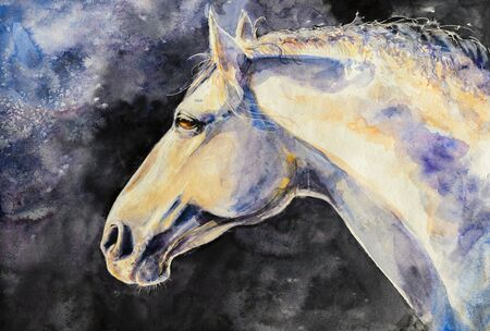 The head of a horse Lipizzan breed. Picture created with watercolors.