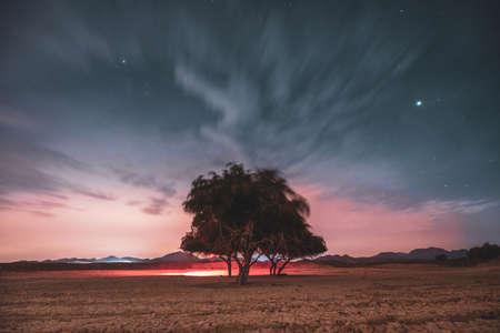 A tree on a cloudy night Foto de archivo