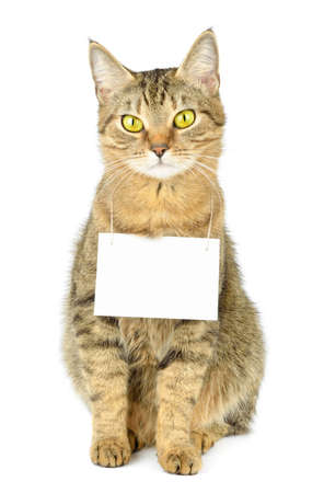 Cardboard hang on neck of cat Reklamní fotografie