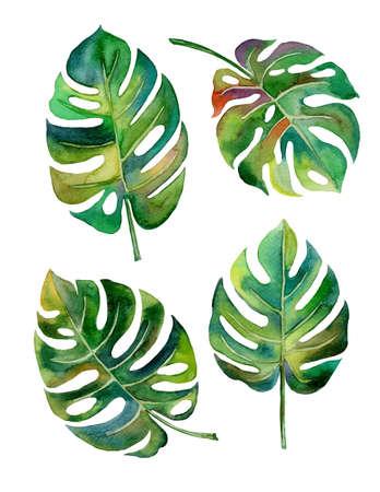 clima tropical: drenaje de la mano del diseño del estilo de la hoja de Split para el sello, papel covertexture ilustración EPS10