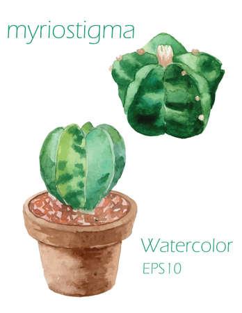 Myriostigma ガーデン本装飾紙テクスチャしみブラシで白い背景ベクトル 図 EPS10  イラスト・ベクター素材