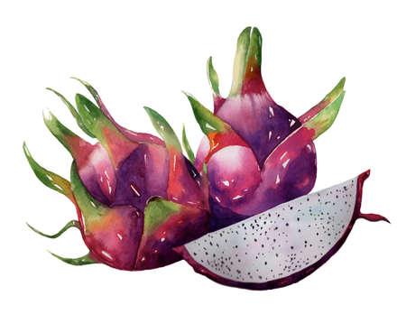フルーツ新鮮な健康的な描画アジア紙テクスチャしみブラシ図 EPS10  イラスト・ベクター素材