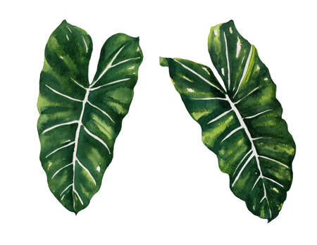 philodendron: hand draw Split leaf style design for the label, covertexture paper illustration EPS10