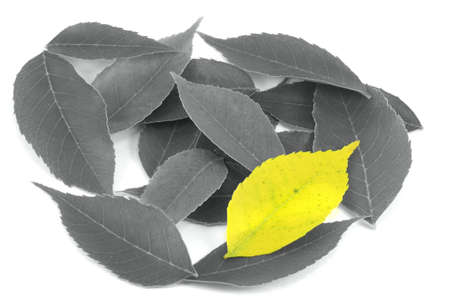 uniqueness: Uniqueness - Single Yellow Leaf Among Black & White Leaves