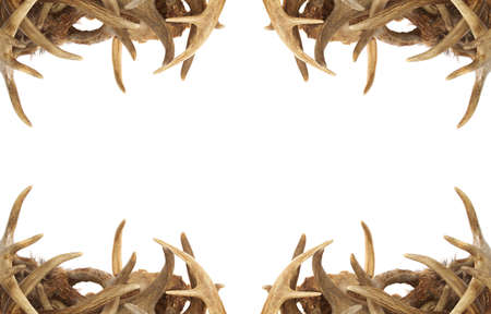 whitetail deer: A background  border with whitetail deer antlers dressing the corners