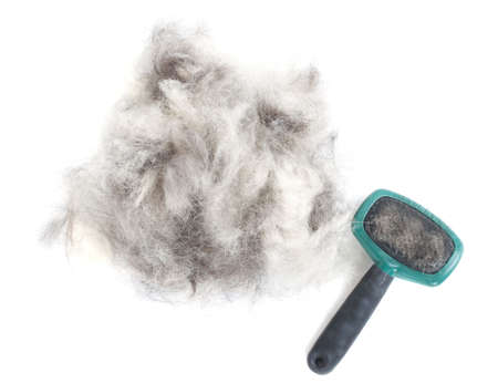 shepherd dog: A pile of dog hair (German Shepherd) with a slicker brush.