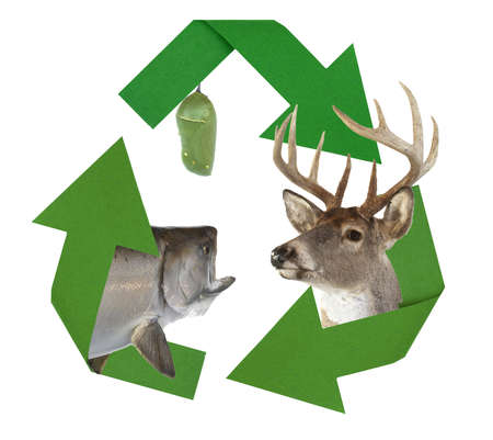 reminding: Recycle symbol decorated with wildlife reminding us to reduce, reuse and recycle.