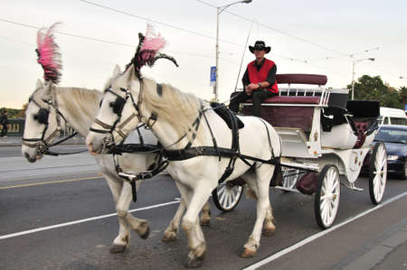 white horse drawn carriages