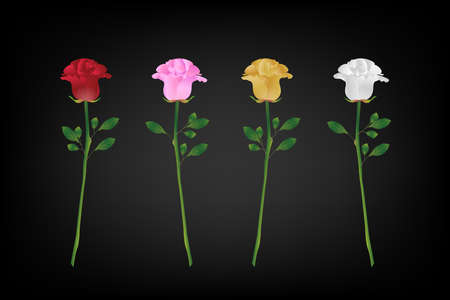 variety: variety of rose for valentines day (Vector eps10) red, pink,yellow and white rose