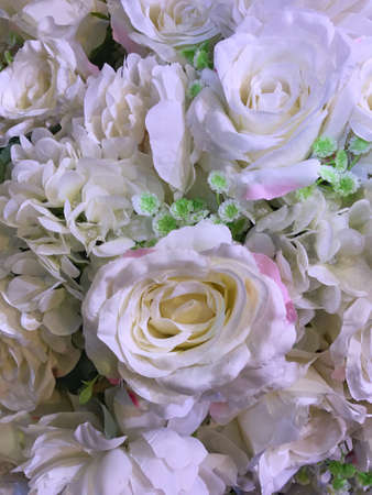 Closed up blooming white rose flower Banco de Imagens - 76743843