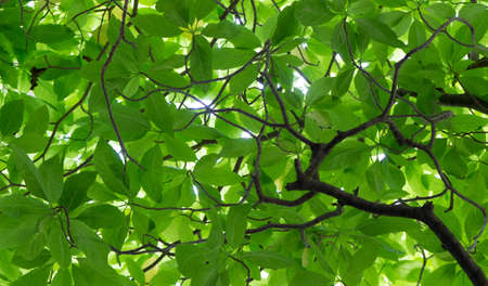 plenty of green leaf background for abstract background love the earth and saving the environment concept