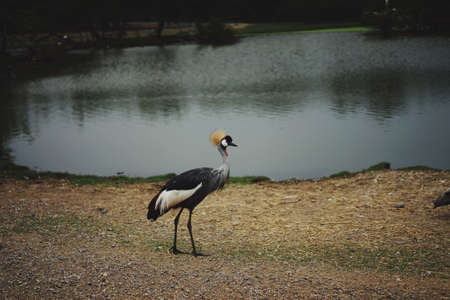 Crane bird in front of lake animal life Banco de Imagens