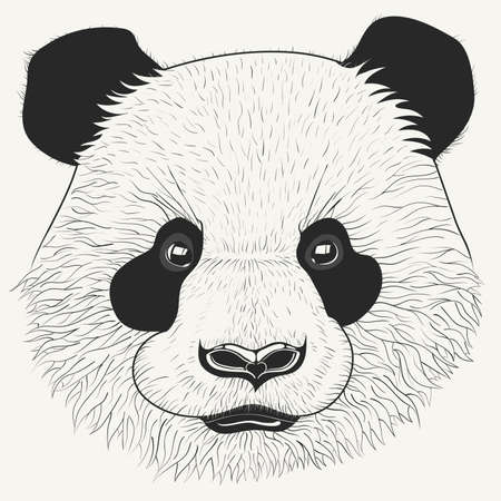 Hand drawn head of cute young panda bear. Modern animal portrait with detailed fur. Perfect for print, posters, t-shirts and textiles. Vector illustration.