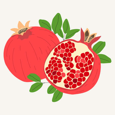 Hand drawn pomegranates in one piece and sliced in half isolated on white background. Vector illustration. Ilustração