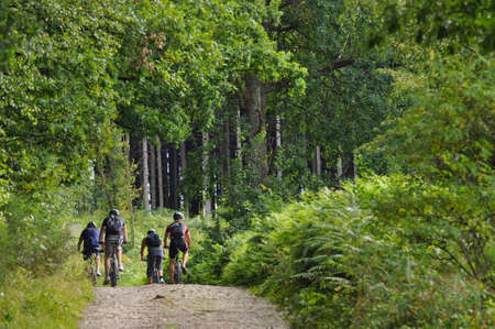 Four mountainbikers in a green forest in the Belgian Ardennes