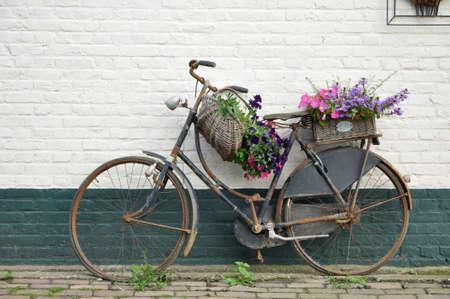 retro bicycle: Moto florecido en Holanda