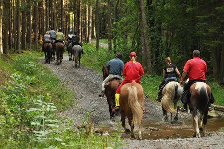 lazer: Um grupo em um passeio de cavalo em uma floresta inthe Ardenas belgas Editorial