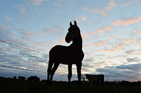 Silhouette of a horse and cows against a dusk cloudy sky