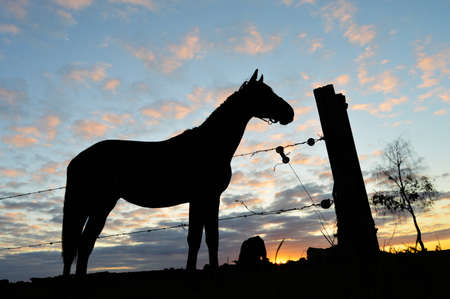 Horse silhouette - Silhouette of a horse and   barling against a dusk cloudy sky photo