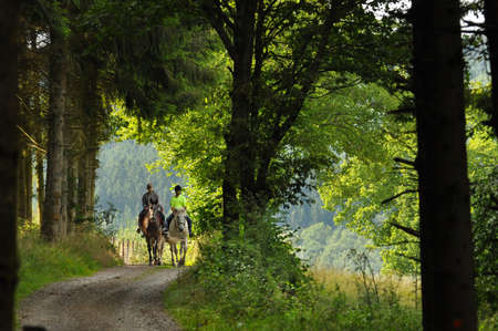 belgian horse: On a horse ride in an forest in the Belgian Ardennes