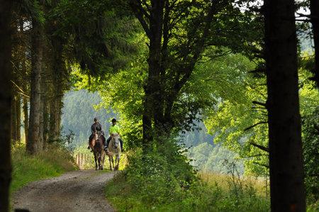 Op een paard te rijden in een bos in de Belgische Ardennen