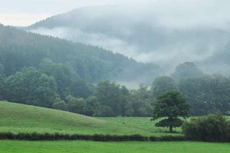 gauzy: Ardennes - A foggy landscape of the Ardennes near Stavelot, Belgium Stock Photo
